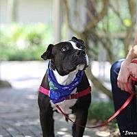 Adopt A Pet :: Floyd - Gainesville, FL