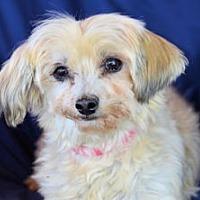 Adopt A Pet :: Lucy - Pueblo, CO