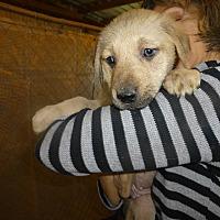 Adopt A Pet :: Brianna - Katy, TX