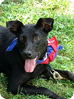 Labrador Retriever Mix Dog for adoption in Bluff city, Tennessee - Cricket