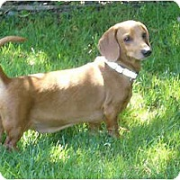 Adopt A Pet :: Oakley - San Jose, CA