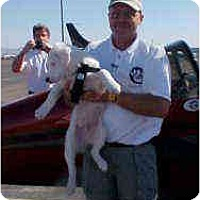 Adopt A Pet :: Baron - Mesa, AZ