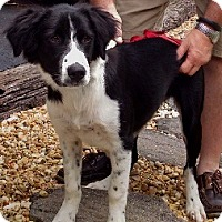 Adopt A Pet :: Riley - Oliver Springs, TN