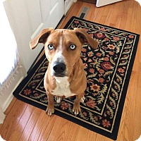 Adopt A Pet :: Praline - Winchester, VA