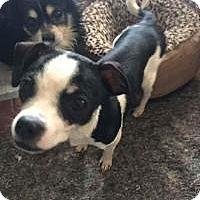 Adopt A Pet :: Oscar & Felix - Ashville, OH