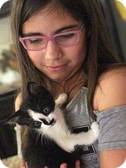 Domestic Mediumhair Kitten for adoption in Mansfield, Texas - Monkey