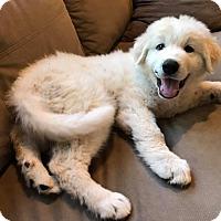 Adopt A Pet :: Jasper - Kyle, TX