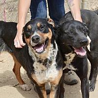 Adopt A Pet :: Rhonda - Santa Barbara, CA