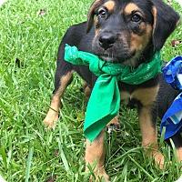 Adopt A Pet :: Alexander - South Dennis, MA