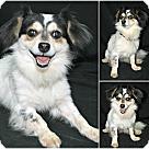 Adopt A Pet :: Melvin