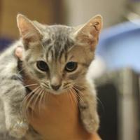 Adopt A Pet :: Tag - Covington, LA
