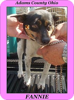 Jack Russell Terrier/Fox Terrier (Smooth) Mix Dog for adoption in New Baltimore, Michigan - Fannie Mae