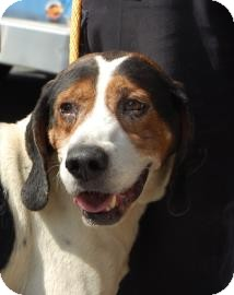 Hound (Unknown Type) Mix Dog for adoption in Brooklyn, New York - Taz