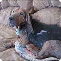 Adopt A Pet :: Betsy - Albuquerque, NM