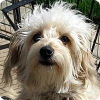 Adopt A Pet :: Haley - Oakley, CA