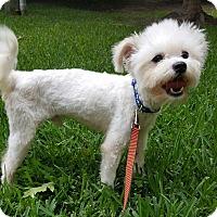 Adopt A Pet :: Marshall - Houston, TX