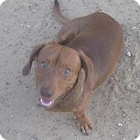 Adopt A Pet :: Rusty - Cross Roads, TX
