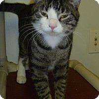Adopt A Pet :: Chloe - Hamburg, NY