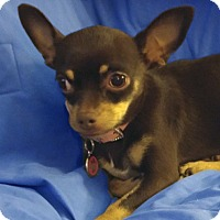 Adopt A Pet :: Rosie - San Francisco, CA