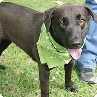 Adopt A Pet :: Moca - Kinston, NC