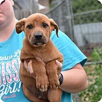 Adopt A Pet :: JAMON - South Dennis, MA