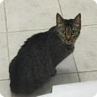 Adopt A Pet :: Muzik 8233 - Columbus, GA