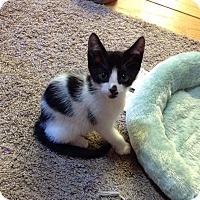 Adopt A Pet :: Milo - Alamo, CA