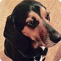 Adopt A Pet :: Todd - Houston, TX