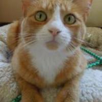 Adopt A Pet :: Sweet P - Long Beach, CA