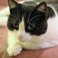 Adopt A Pet :: Sweet Mamma - Walnut Creek, CA
