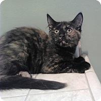 Adopt A Pet :: McKeon 4 - Plainville, MA