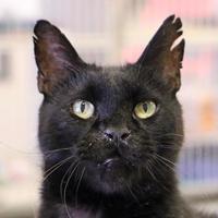 Adopt A Pet :: Dylan - Austin, TX