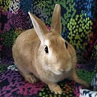 Adopt A Pet :: Augie - Watauga, TX