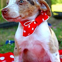 Adopt A Pet :: Ruth - Batesville, AR