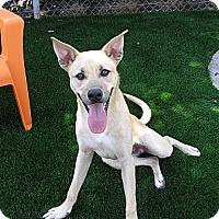 Adopt A Pet :: Jolly - Santa Ana, CA