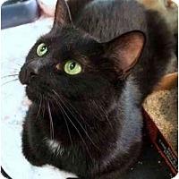 Adopt A Pet :: Kit - Alexandria, VA