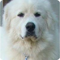 Adopt A Pet :: Angel  -Adopted - Oklahoma City, OK