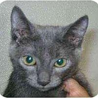 Adopt A Pet :: Dan - Lunenburg, MA