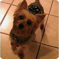 Adopt A Pet :: Jackson - Conroe, TX