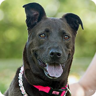 Labrador Retriever Mix Dog for adoption in Vista, California - Miya