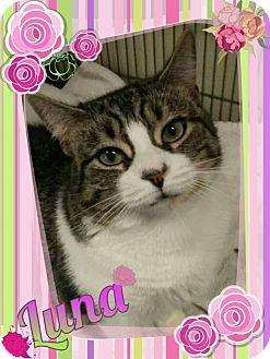 Domestic Shorthair Cat for adoption in Sewaren, New Jersey - Luna