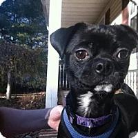 Adopt A Pet :: Goblin - Mt Gretna, PA
