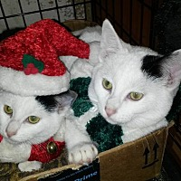 Adopt A Pet :: Kissy - Bethpage, NY