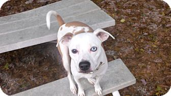 Terrier (Unknown Type, Small) Mix Dog for adoption in Muskegon, Michigan - Roni