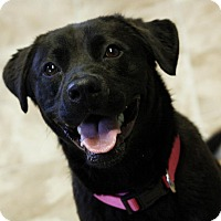 Adopt A Pet :: Cherry-IN CT - Manchester, CT
