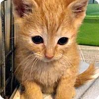 Adopt A Pet :: Gus-Gus - Jefferson, NC