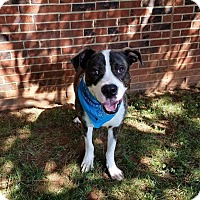 Adopt A Pet :: ED - Lexington, NC