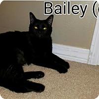 Adopt A Pet :: Bailey - Mobile, AL