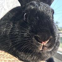 Adopt A Pet :: Herman - Edinburg, PA
