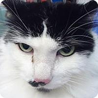 Adopt A Pet :: Cheeka $29 - batlett, IL